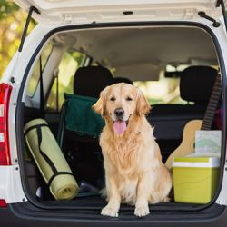 national pet travel safety month