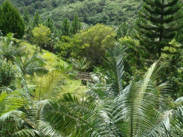 132 Best Ile Maurice Images On Pinterest Mauritius