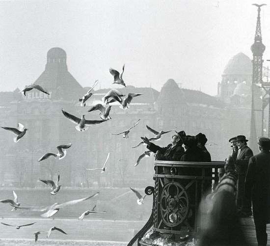 Feeding gulls from the Bridge of Liberty #Budapest