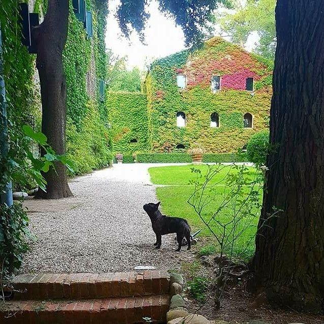 Location matrimoni #matrimonio #marriage #wedding #marche #cingoli #garden #giardino #park #abbazia #abbey #autumn #autumn🍁 #autunno #cipresso #cipressi #pino #cypress #pine #berries #red #rosso #edera #ivy #dog #cane #bulldog http://www.villadellarovere.com