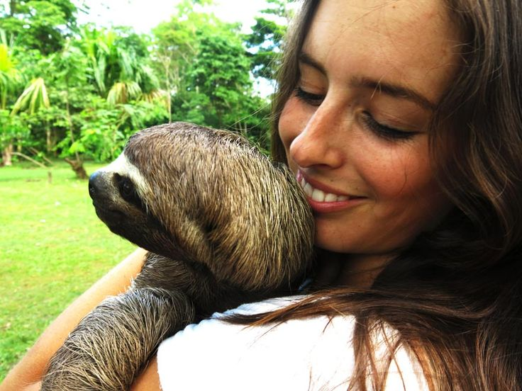 Sloths! Amazon l Peruvian Rainforest l Iquitos, Peru l @tbproject