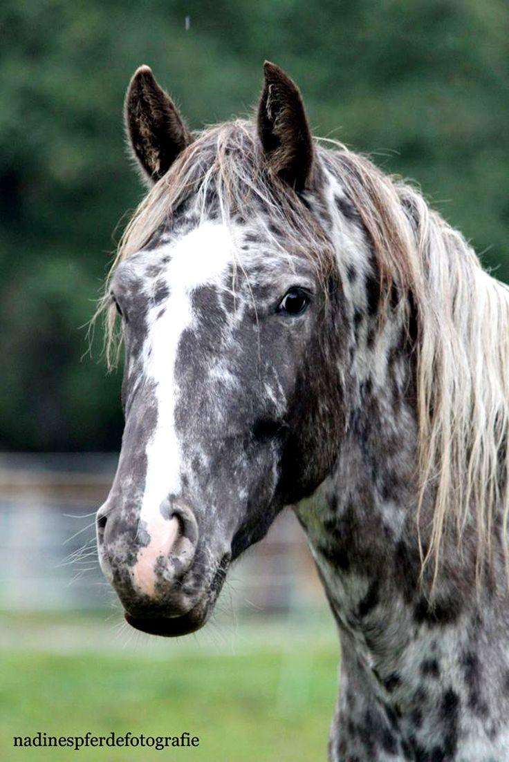 Popular Wallpaper Horse Girly - 6a8e3609a811d8c2d12e431f0edcdbb9--gray-horse-black-horses  Snapshot_732110.jpg