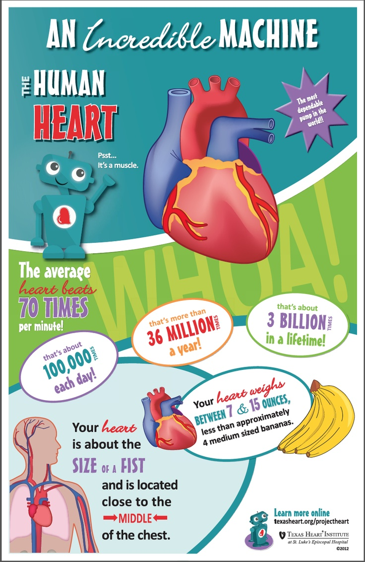 52 best health teacher lesson plans images on pinterest human body fun facts for kids about the heart valves an incredible machine in the human body by texas heart institute buycottarizona Images