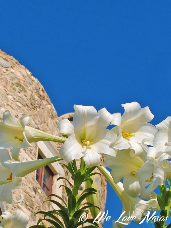 Beautiful lilies !! by Ελεύθερος Δημιουργός on 500px