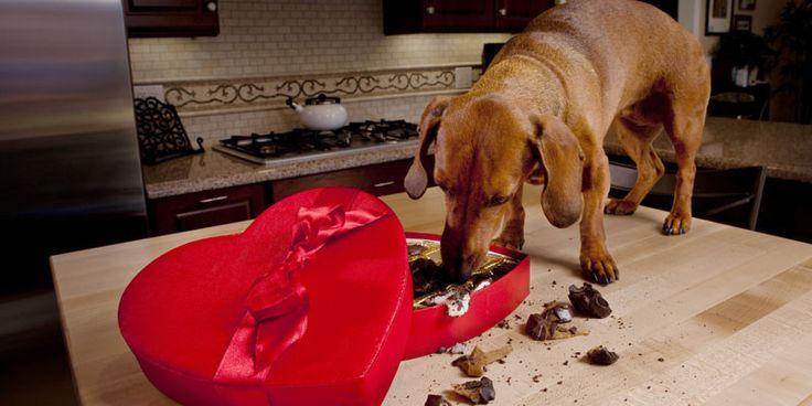 Can Roasted Garlic Kill My Dog