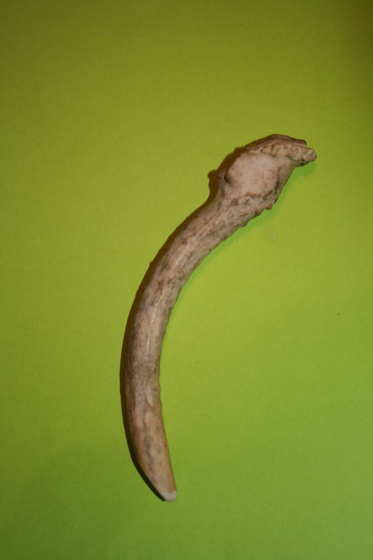 Natural Whitetail Deer Horn Antler Dog Chew Bone Small or Medium Breeds - pinned by pin4etsy.com