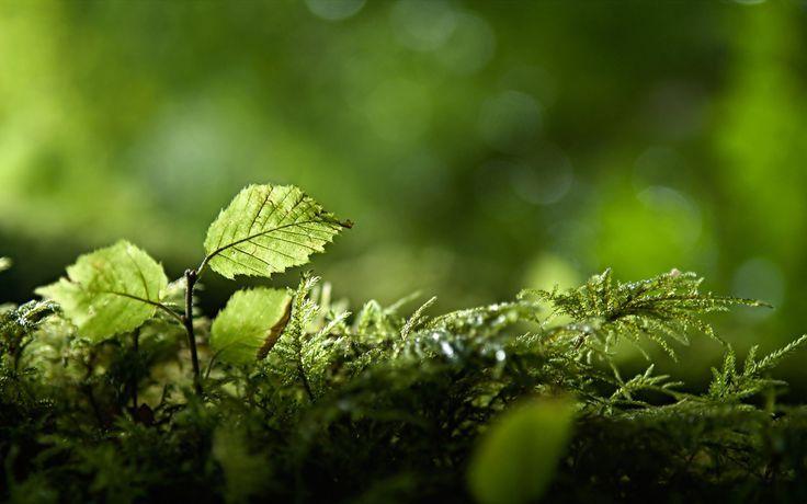 Macro Wallpaper Green Nature Nature Plants Plants