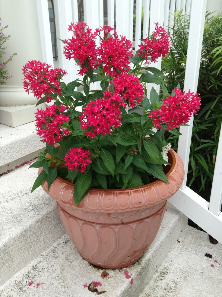 65 Best Images About Containers And Window Boxes On
