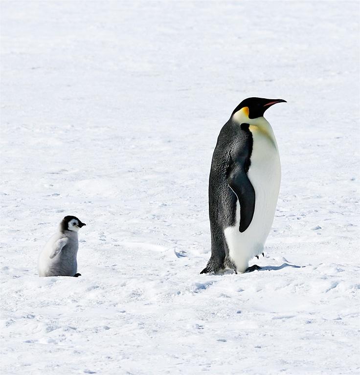 ペンギン♪かわいい♪