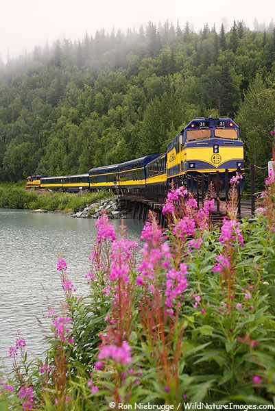 The flower is Fireweed. It comes out every late summer telling you that Fall is on the way. Don't blink or you'll miss the whole Fall season!!