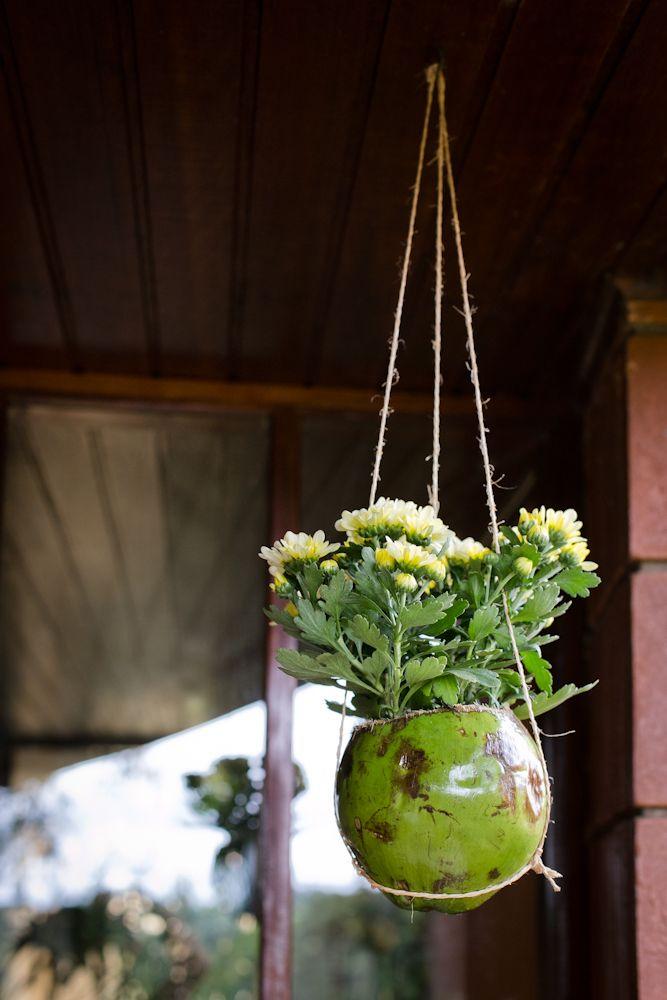Transforme um coco em vaso suspenso