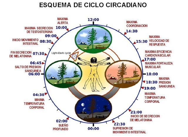 EL CICLO CIRCADIANO Y LA ILUMINACIÓN ARTIFICIAL - Arq. JOSE ANTONIO NEIRA REYMER