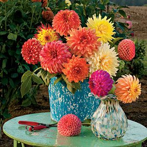 dahlia's are an easy late summer/fall arrangement