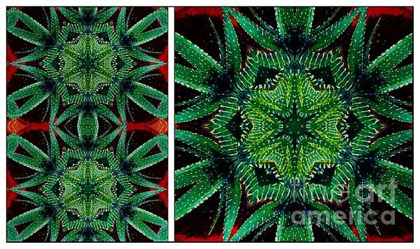 Cactus Triptych by Barbara Griffin.