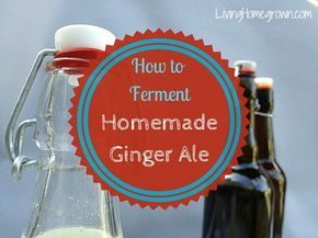 "Learn how to home ferment your own ginger ale soda (aka ginger beer) using a ""ginger bug"". It is easy, delicious and you know EXACTLY what's in it."