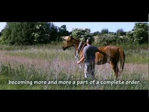 Hempfling - THE ZEN HORSE