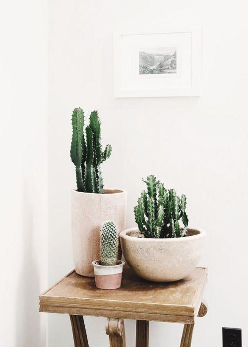 dailyinspiration-moodboardtumblr Plants and Garden spaces - decoracion de interiores con plantas