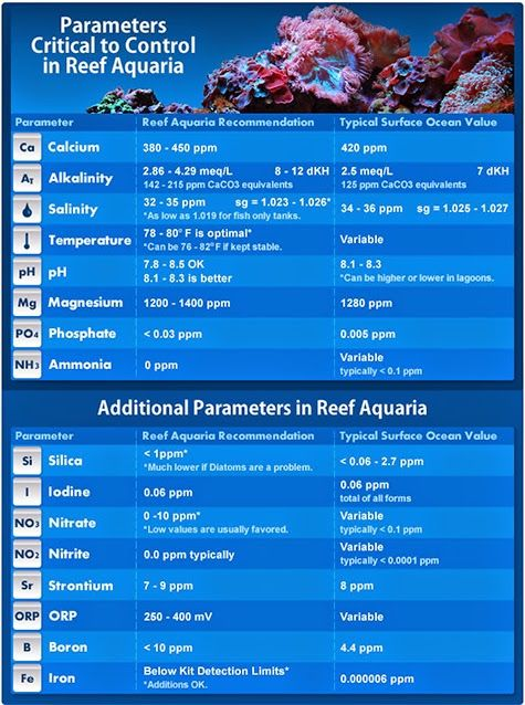 small screenshot 1 office fish. today we are going to share which water parameters you need test for in a fishonly or reef aquarium explain how these effect fish and coral small screenshot 1 office i