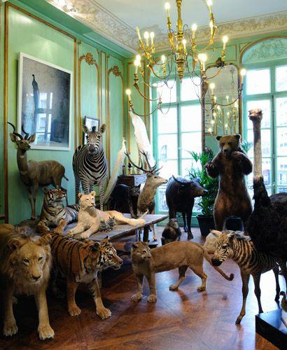 Deyrolle 45 Rue du Bac, 75007 Paris Must-see place in Paris[Taxidermie, entomologie, curiosités naturelles]