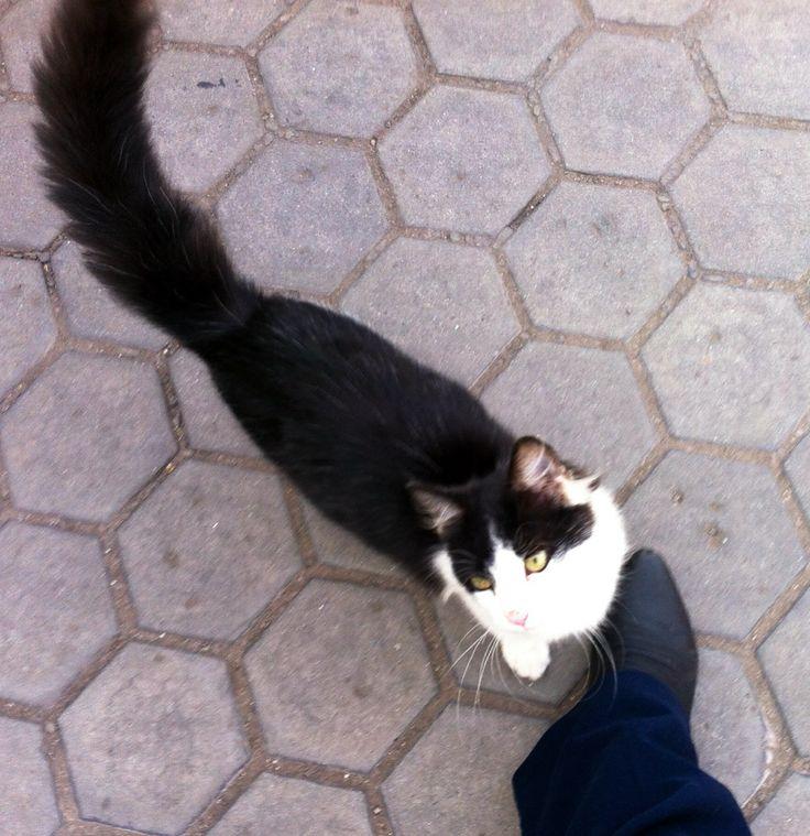 They follow me. Gato callejero, donde paso se me acercan.