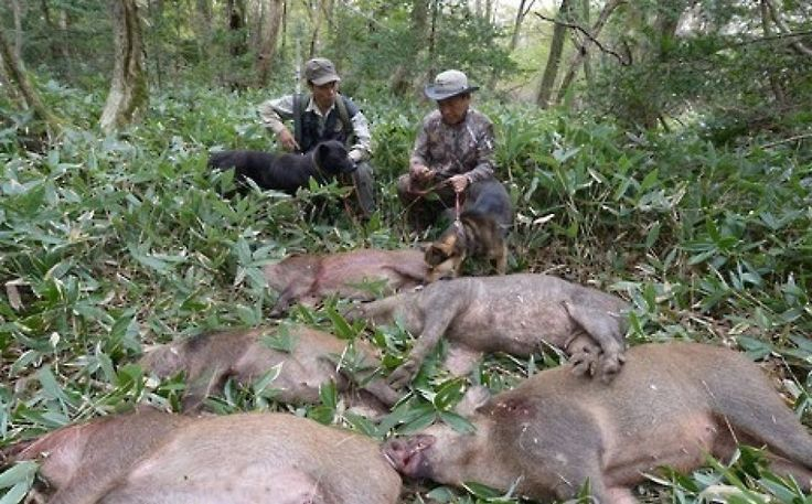 Langley Ranch THE BEST WILD HOG HUNTING IN TEXAS wwwTexasWildHogHunting.com Texas Wild Hog Hunting East Texas Wild Boar Hunting. Houston Hog Hunting Dallas ...