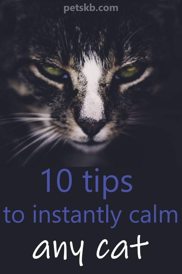 10 Tips to INSTANTLY Calm ANY Cat   Cat care Calming cat ...