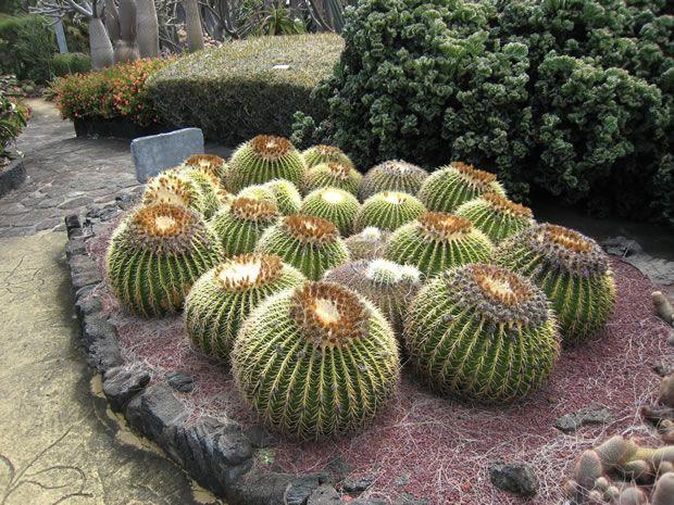 Mejores 18 im genes de todo sobre cactus y suculentas en for Informacion sobre el cactus