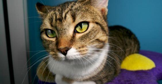 Oltre 25 fantastiche idee su tiragraffi per gatti su for Tiragraffi per gatti ikea