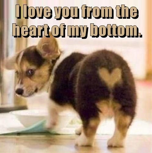 I Love You From The Heart Of My Bottom Animal Love Quotes Cute Animals With Funny Captions Cute Animal Quotes