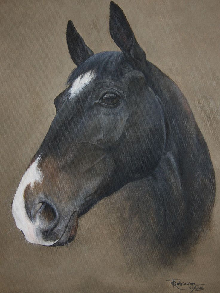 'Ripoll' by Tania Robinson. Thoroughbred flat racer trained in Lambourn, UK. Acrylic on canvas. 2016 private commission.
