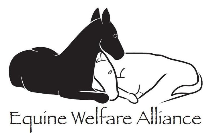 FRONT RANGE EQUINE RESCUE DISCOVERS SEVERAL NEW APPLICATIONS FOR HORSE SLAUGHTER FACILITIES              LARKSPUR, COLORADO - Front Range Equine Rescue (FRER) has received copies of four previously undiscovered applications for new horse slaughter plants - in Tennessee, Missouri, Oklahoma and Iowa - bringing the number of pending applications to six.  Two of the applications are over nine months old, despite longstanding official denials about any more new applications.