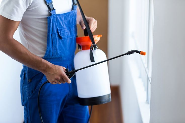 Green Pest Control – Highly Popular Choices for Today #pestcontrol