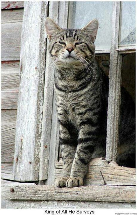 """** """"Out to quest fer day; chow, den human 'doption."""""""