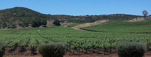 Resultado de imagen para planta vitivinicola nativa de baja california