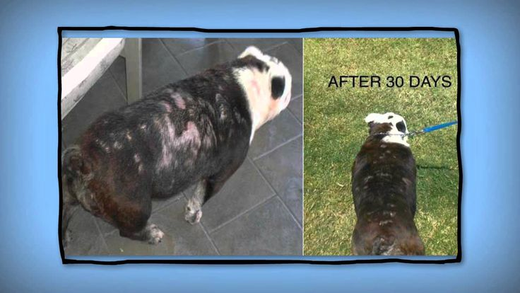 ►Best Pet Shampoo to prevent and cure hair loss in dogs and cats.