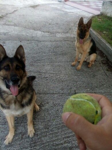 Rita and Ciro and the ball....
