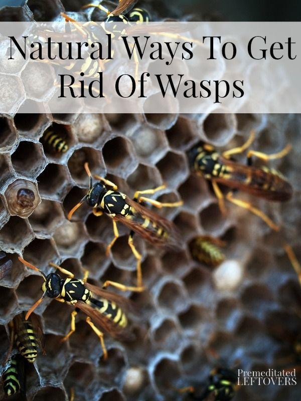 Natural Ways To Get Rid Of Wasps Natural Get Rid Of