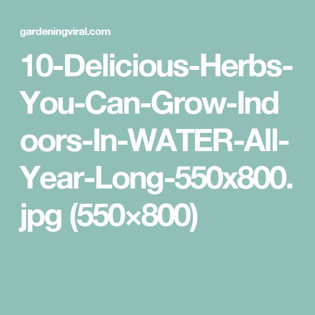 10-Delicious-Herbs-You-Can-Grow-Indoors-In-WATER-All-Year-Long-550x800.jpg (550×800)
