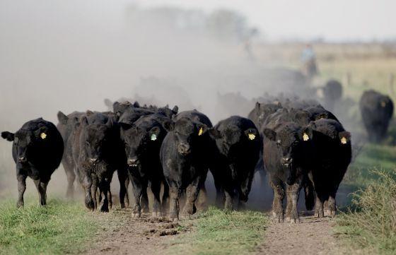 El mundo come #carne por encima de sus posibilidades | Producir carne es muy costoso y sería más efectivo alimentar personas con los cereales que se destinan al engorde del ganado.  El problema no es tanto el consumo de carne sino el abuso. Si España volviera a la dieta mediterránea, no solo los ciudadanos tendrían mejor salud sino que las emisiones de gases de efecto invernadero asociadas a la producción de alimentos bajarían un 72%; el uso de tierras agrícolas se reduciría un 58%; la…