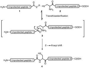 Thioesters are critical components of the native chemical ligation method for peptide synthesis