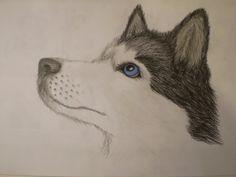Husky Face Drawing
