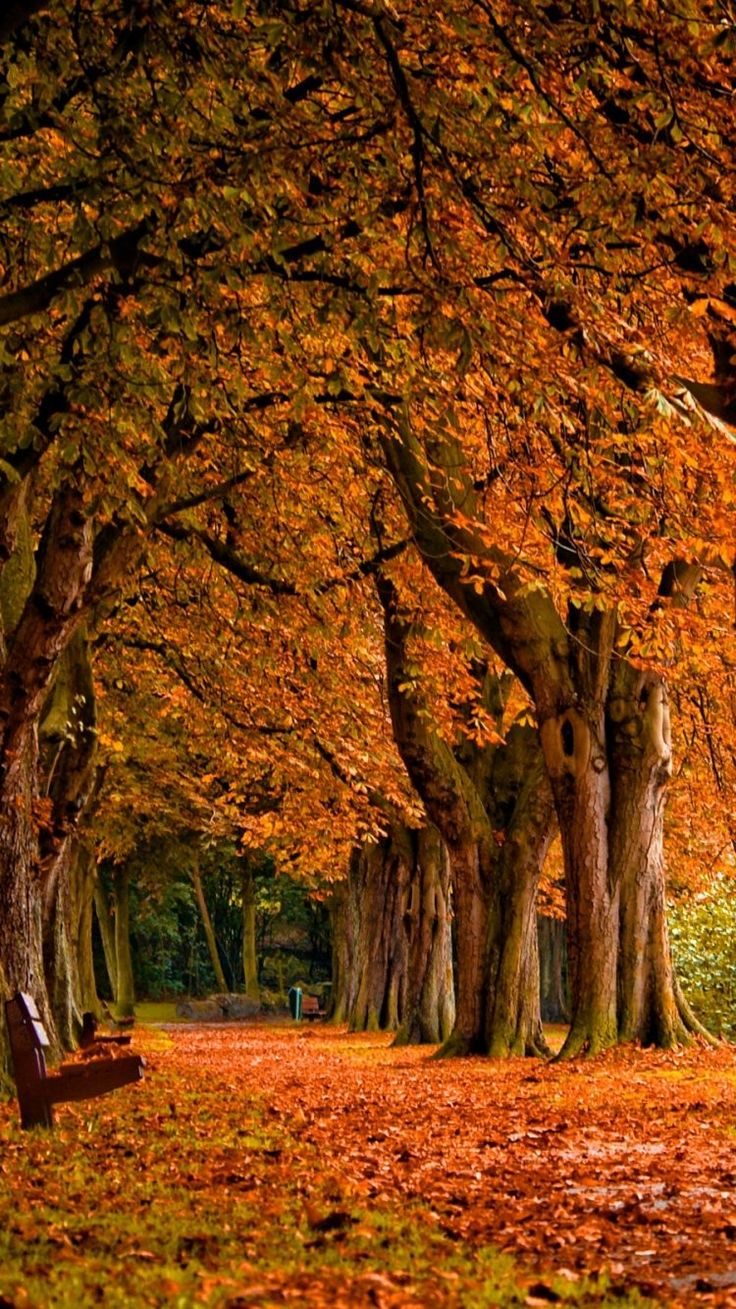 Fall Scenery IPhone 6 Wallpaper 18762