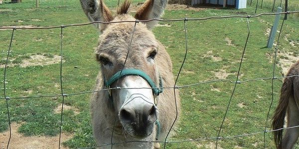 petition: End cruel seaside Donkey rides in Clevedon, UK! United Kingdom / http://www.thepetitionsite.com/takeaction/980/878/206/
