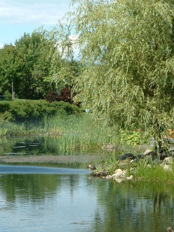Arboretum en été