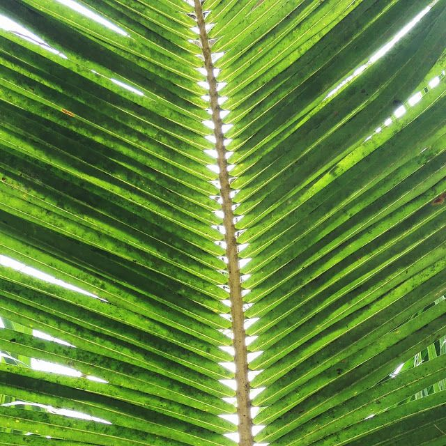 coconut tree leaf pattern | For the Home | Pinterest