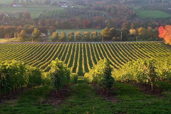 Annapolis Valley Food & Wine Tour | novascotia.com