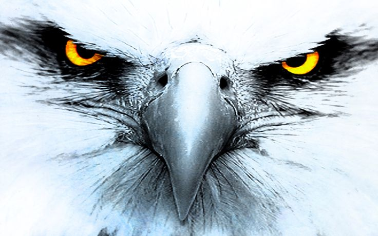free screensaver wallpapers for eagle