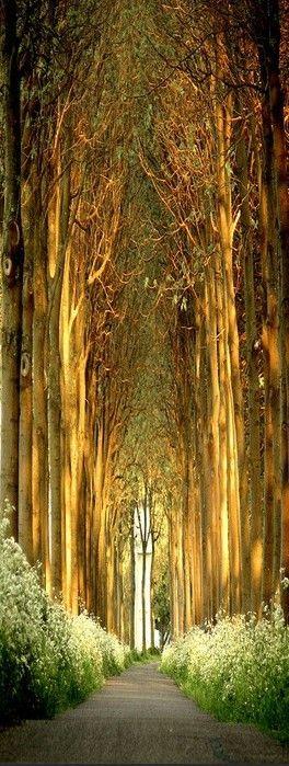 Igreja de árvores na Bélgica