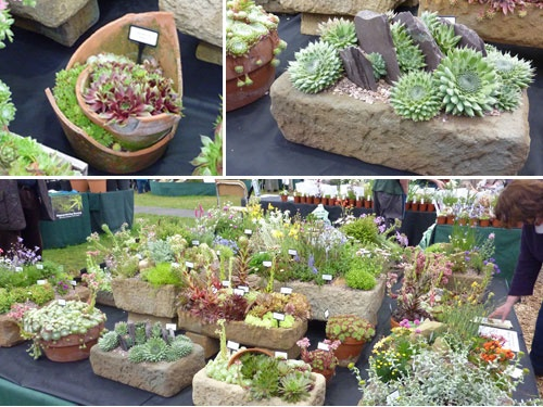 17 Best 1000 images about Cacti Succulents Alternative Gardening on