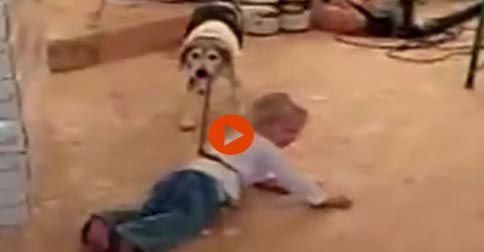 Beagles Are Awesome #Funny#Cute#Dogs#Adorable#Animals
